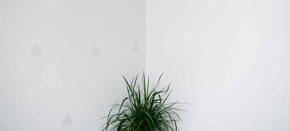 Plant in the corner of a room