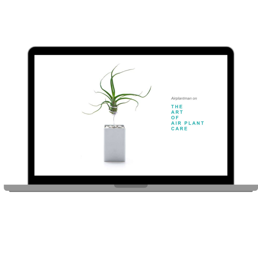 "Image of opened laptop with white  background desktop color. In the center is a plant with text to the right of the plant in blue font ""the art of air plant care."""