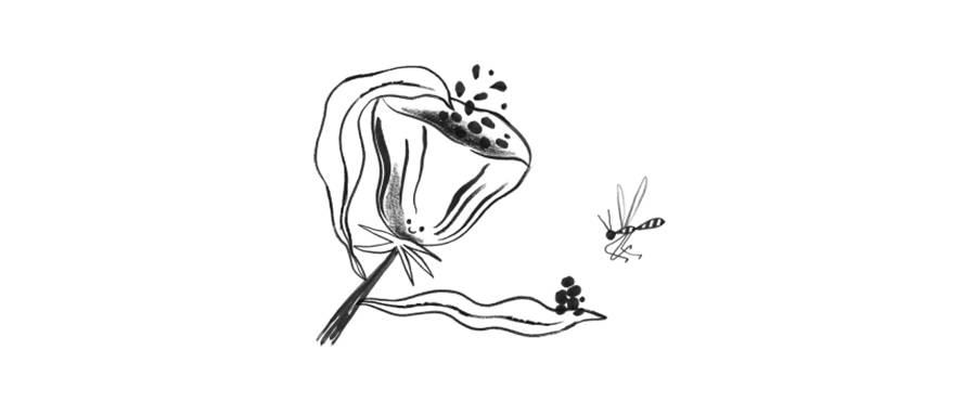 Doodle of a flower offering it's pollen to a nearby bee. Representing serving your clients.