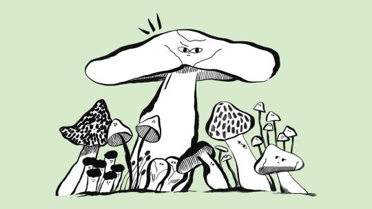Mushrooms growing.