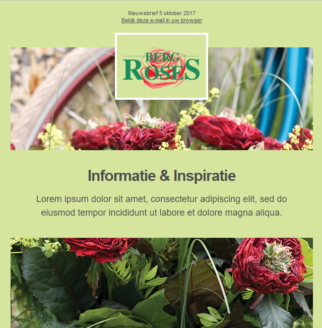 Custom email template for flower company. Background color is a light green and template includes two photos of rose bushes with brand logo.