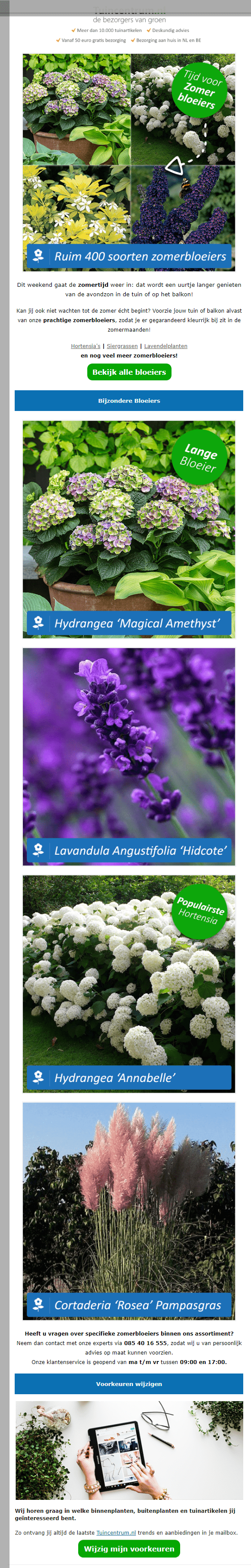 Image of a newsletter with flowers