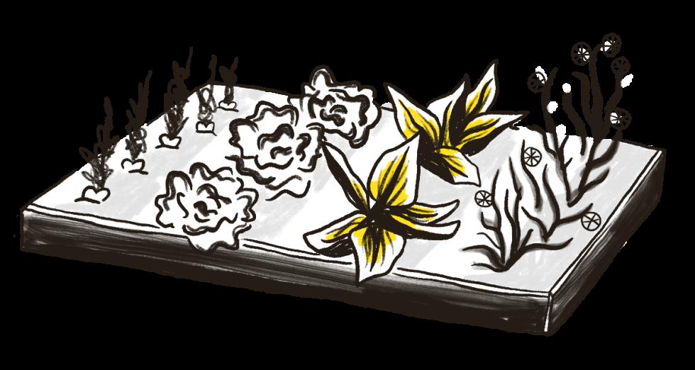 Illustration of a garden