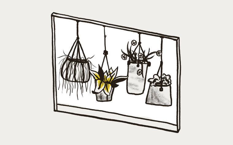 A window showing various hanging plants